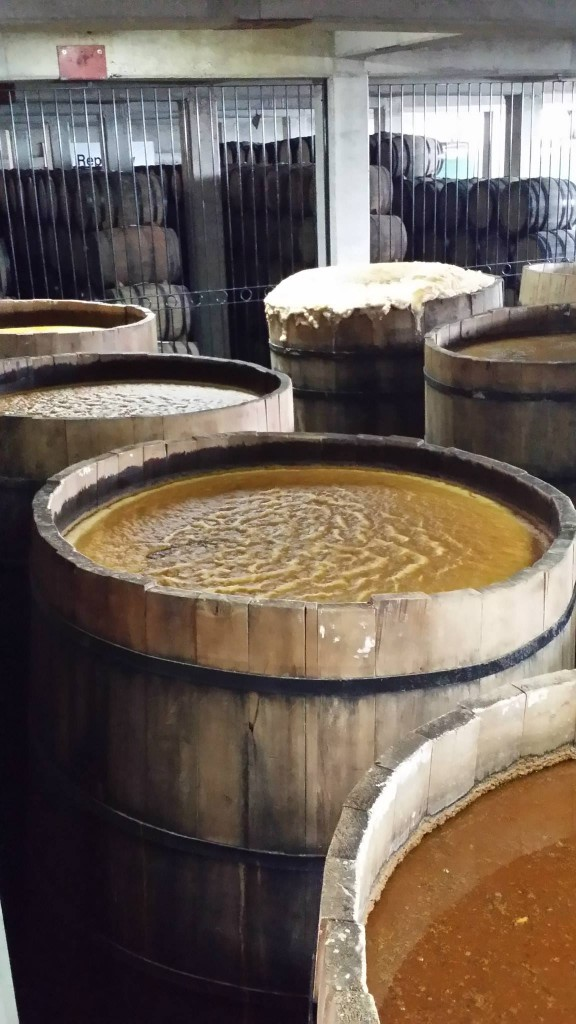 The traditional fermentation tanks at La Altena are made from pine. The open vats allow airborne yeast and bacteria to freely mix with the juice. Fermentation lasts between 4-5 days