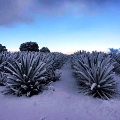 Snow in los Altos March 2016