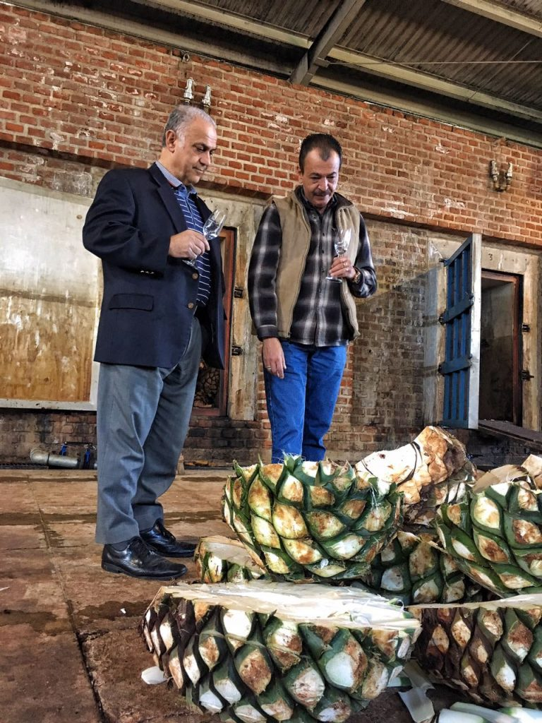 Carlos Camarena (master distiller at Distileria La Alteña) & Dale Sklar , the joint owners of Tequila Villa Lobos examining the Agave before cooking in the ovens behind them last week in Arandas.